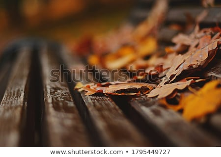 Wood bench in autumn Stock photo © Elenarts