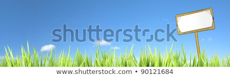 blank wooden sign at the field of green panoramic composition i stock photo © moses