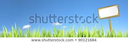 verde · campo · blue · sky · primavera · estrada - foto stock © moses