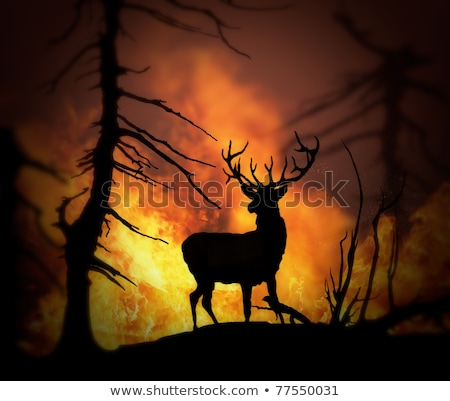 Large elk escaping a wild land fire Stock photo © digitalstorm
