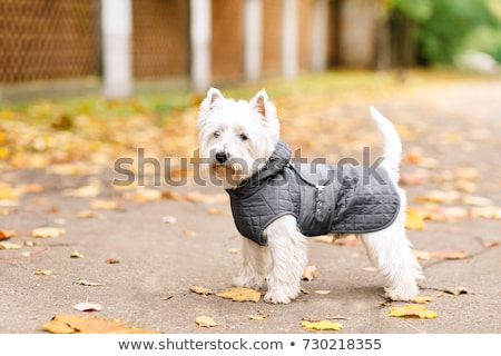 Chien manteau illustration hiver animaux Photo stock © lenm