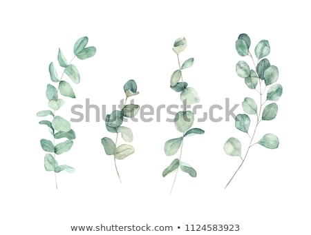 Stock photo: colorful  leaves