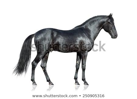 Siyah at çim alanı ayakta güçlü Stok fotoğraf © teusrenes