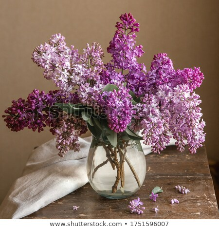 lila · jarrón · frescos · flores · frontera - foto stock © anskuw