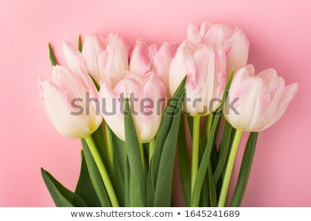 Photo stock: Bouquet Of Pink Dutch Tulips In Vase