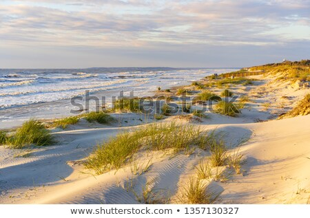Sunrise along the Georgia Coast with Wave Stock photo © oliverjw