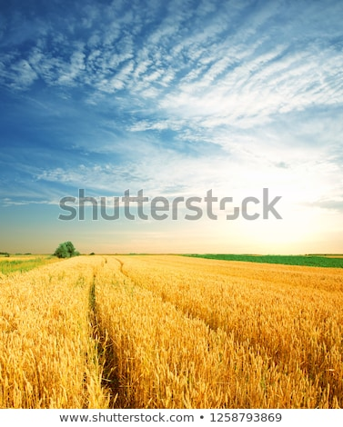 Green field against blue sky Stock photo © Forgiss
