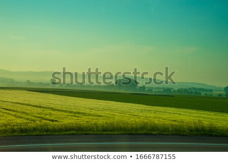 Stok fotoğraf: çim · alanı · ağaçlar · dağ · atış · ağaç