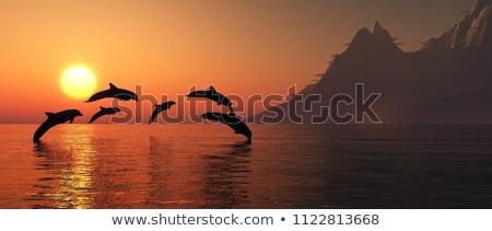 Dauphins coucher du soleil rendu 3d ombre deux faible Photo stock © Elenarts