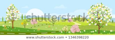 armut · ağaç · beyaz · çiçekler · çiçek · yeşil · bahar - stok fotoğraf © taden