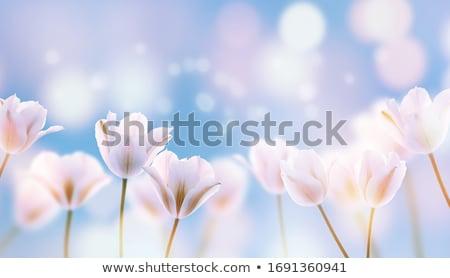 場 · 開花 · 豌豆 · 藍天 · 雲 · 春天 - 商業照片 © alinamd