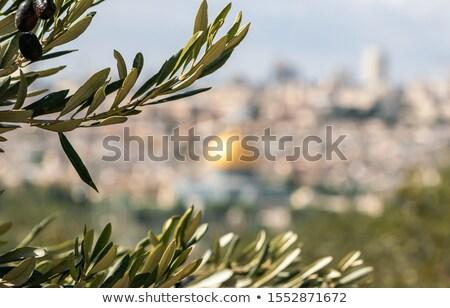 oude · Jeruzalem · steegje · kwartaal · stad · Israël - stockfoto © andreykr