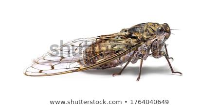 verano · insectos · maravilloso · sonido · caliente - foto stock © rghenry