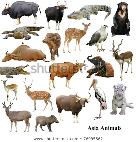 collection of gaur isolated Stock photo © anan