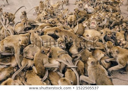Ape manger trouver fourmis longtemps herbe Photo stock © c-foto