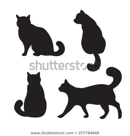cute · noir · vecteur · chat · icône · isolé - photo stock © aliaksandra