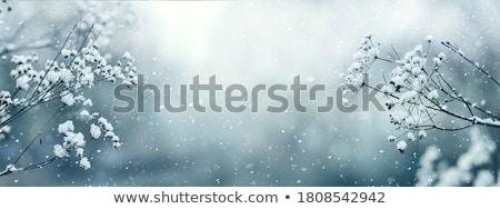 winter · bos · landschap · panorama · panoramisch · sneeuwval - stockfoto © fotoyou