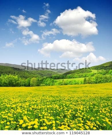 весны пейзаж луговой деревья холмы небе Сток-фото © ondrej83