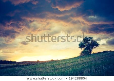 Viharfelhők arany mező búza kék ég felhők Stock fotó © lypnyk2