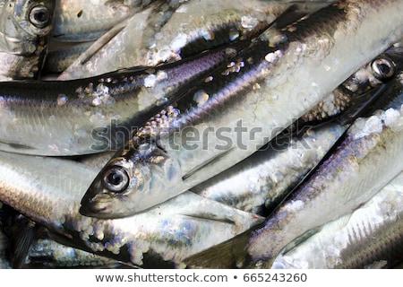 świeże lodu wiadro gotowy transportu ryb Zdjęcia stock © emattil