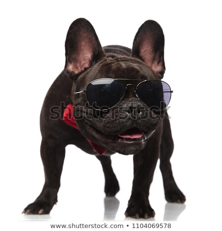 happy curious french bulldog puppy dog wearing bow tie stock photo © feedough