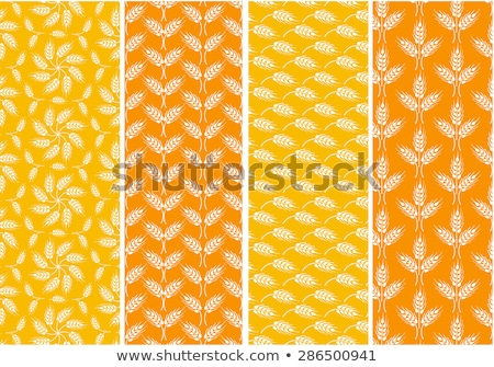 vetor · sem · costura · trigo · padrões · coleção - foto stock © freesoulproduction