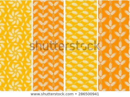 Vektör toplama buğday desen Stok fotoğraf © freesoulproduction