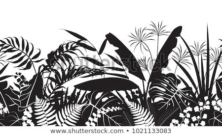 Fougère silhouettes arbre art été Photo stock © gladiolus