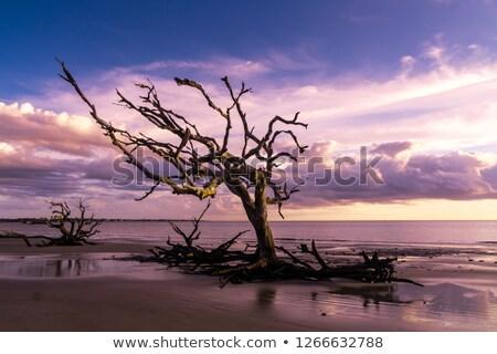 cênico · morto · madeira · raiz · secar · paisagem - foto stock © meinzahn