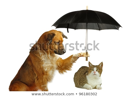 A rain with cats and dogs Stock photo © bluering