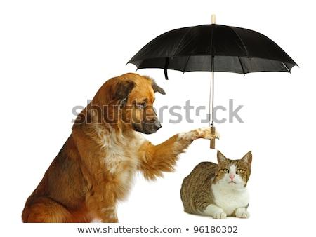 katten · honden · hond · regen · dier - stockfoto © bluering