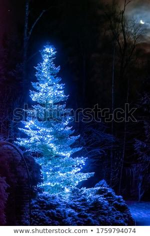 Kerstboom nacht buitenshuis maan lichtblauw sneeuw Stockfoto © Konstanttin