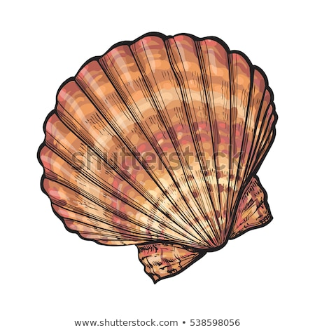 Scallop, Isolated Illustration Stock photo © ConceptCafe