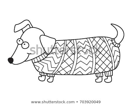 Stock fotó: Tangled Dachshund Dog