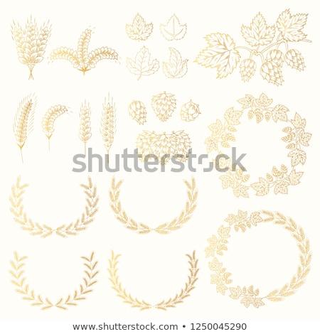 Golden hops Stock photo © blackmoon979