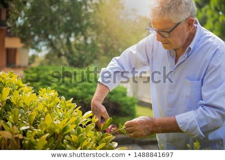 Stok fotoğraf: Portre · kıdemli · adam · bahçıvanlık · bahçe · renk