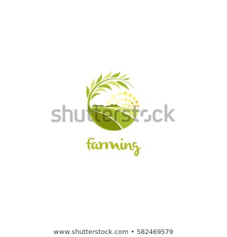 трава иконки красивой луговой солнце Сток-фото © Tefi