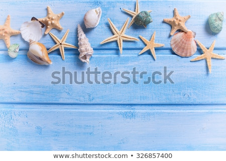 Sea frame. Different marine items on blue wooden background. Sea stock photo © Yatsenko