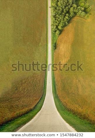 Stock fotó: Megművelt · kukorica · termény · mező · felső · kilátás