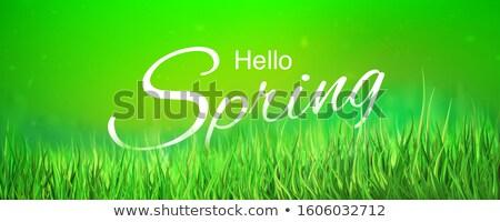 緑 · 緑の草 · 空 · 花 · 草 · 太陽 - ストックフォト © barbaliss