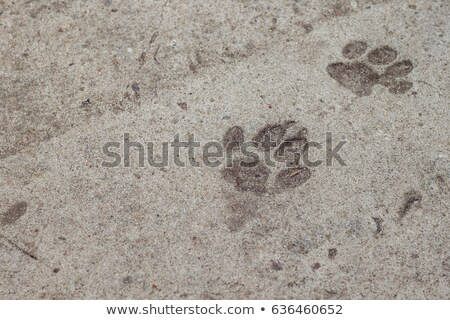 Cat's paw print in concrete Stock photo © IS2