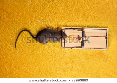 dead Mouse in cheese trap over yellow Stock photo © lunamarina