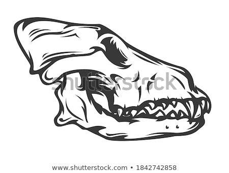 Wolf Cranium stock photo © p0temkin