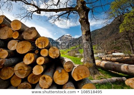 firewood stack on summer mountains Stock photo © wildman