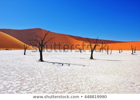 Száraz fa halott Namíbia gyönyörű reggel Stock fotó © artush