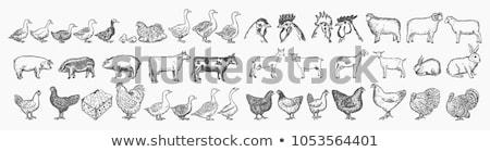 çiftlik hayvanları çiftçi poster örnek Bina arka plan Stok fotoğraf © colematt