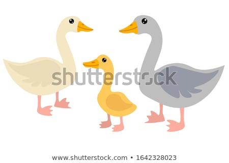 гусь белый иллюстрация фон искусства птица Сток-фото © bluering