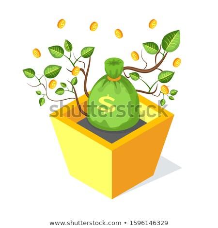 Bani sac copac crestere ghiveci de flori sol Imagine de stoc © robuart
