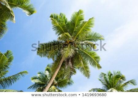 Scenic View Of Anse Marie-Loise, Mahe Island, Seychelles Stock photo © AndreyPopov