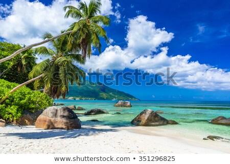 Isola Seychelles primo piano palma acqua estate Foto d'archivio © AndreyPopov